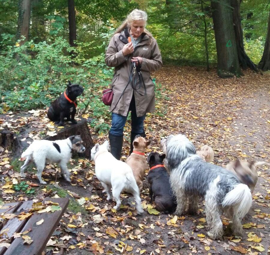 Professionelle Betreuung mit über 14 Jahren Hundeerfahrung!