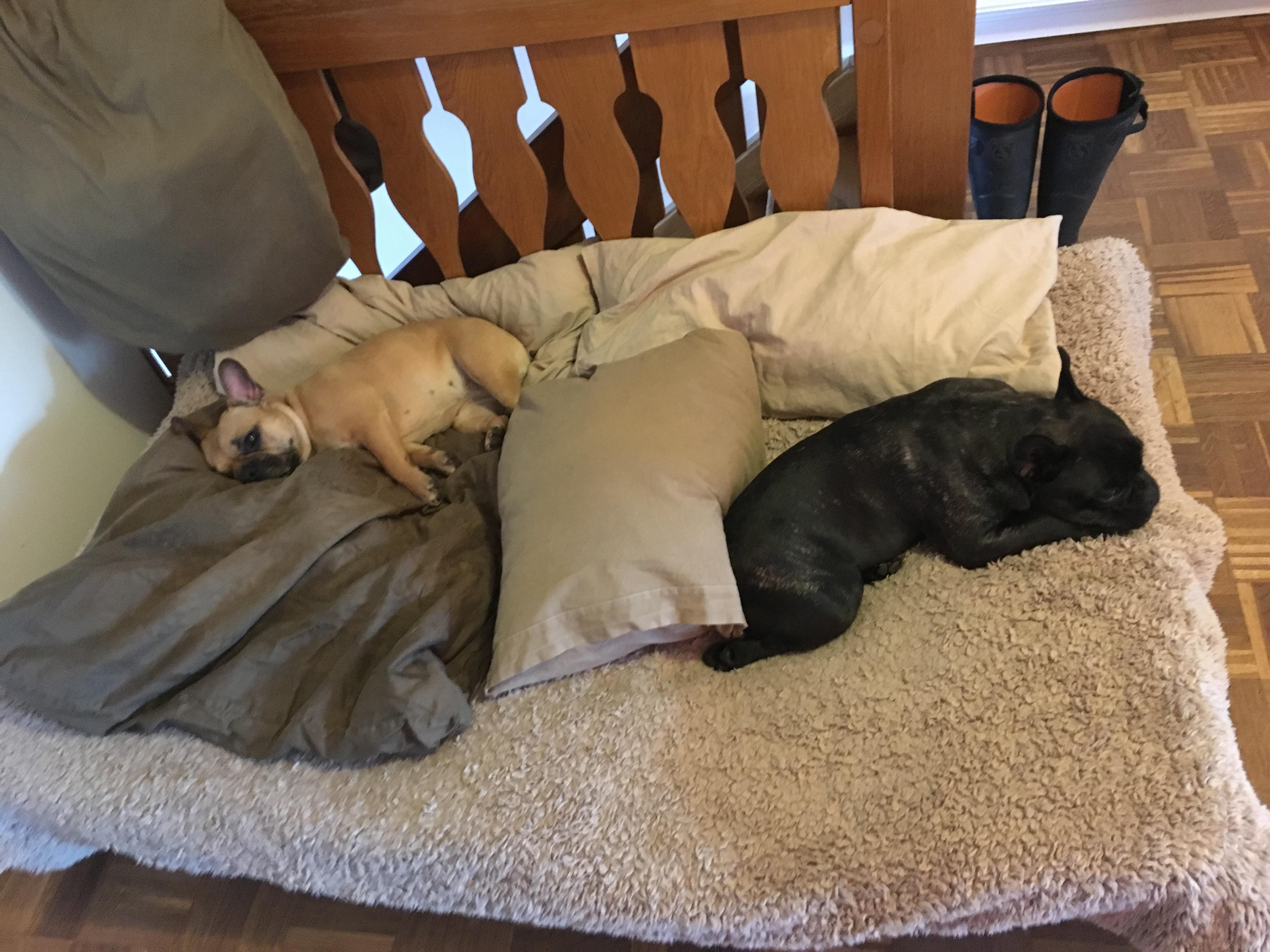 Hundepension – Übernachtungen