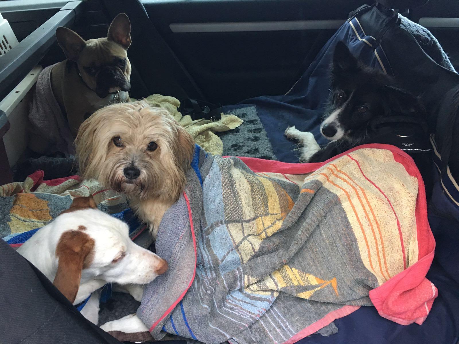 Hundebetreuung mit Abhol-und Bringservice